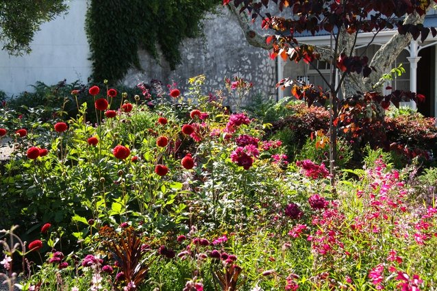 Mixed perennial planting of dahlias, penstemon and scabiosa and specimen tree <em>Cercis</em> create a immersive landscape of colour in the garden of this grand old villa.
