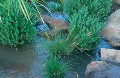 Green life for erosion control